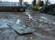 Razzia auf Milchbetrieb – 700 verwahrloste Kühe im Kreis Dithmarschen