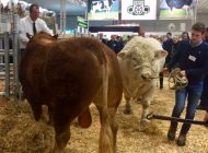 Die EuroTier - world leading trade fair for animal farming